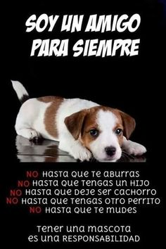 Animals And Pets, Funny Animals, Cute Animals, I Love Dogs, Puppy Love, French Poodles, Barbie, Love Me Forever, Jack Russell Terrier