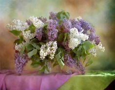 lilacs - (by Dasha Nikonchuk)