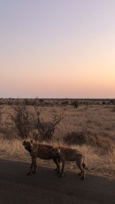 Go to our website of the top photography educational videos, tips and tricks. Kruger National Park Safari, Yellowstone National Park, Serengeti National Park, South Africa Wildlife, Wildlife Safari, Especie Animal, Photo Grid, Wild Dogs, African Safari