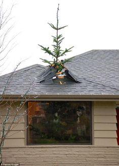 arbol ilusion optica. Se sale del techo.