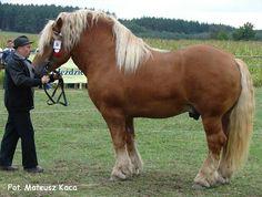 sztumski horse
