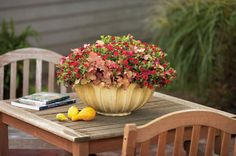 What a great centerpiece for a fall fiesta! This stunning focal point includes Superbells Red Calibrachoa and Dolce Peach Melba Heuchera.