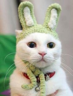 Funny Cat Custome Part 2 #cutecat - About cat at Catsincare.com!
