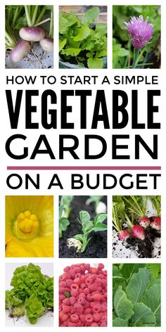 These tips for growing vegetables for beginners on a budget will help you with starting a garden cheaply in pots and containers even if your gardening in a small space in your backyard. These vegetable growing tips show you don't need fancy raised beds to get started and will help you pick the best seeds for fast growing veggies. #growingvegetables #vegetablegrowing #growyourownvegetables #vegetablegarden #startavegetablegarden #growingvegetablesforbeginners Gardening For Beginners, Gardening Tips, Fruit Garden, Green Garden, Organic Gardening, Vegetable Gardening, Growing Veggies, Starting A Garden, Organic Vegetables