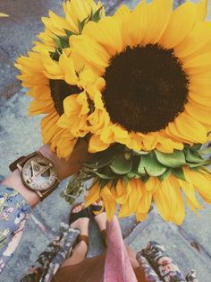flowers, sunflower, and yellow image My Flower, Beautiful Flowers, Plants Are Friends, Mellow Yellow, Pretty Pictures, Flower Pictures, Mother Nature, Planting Flowers, Web Design