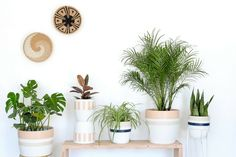 Plant Care 101 with Pop Up Greens – Local + Lejos