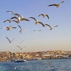 istanbul aşıkları....(zafer öztürk.)