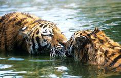 Adozione Digitale - Sostieni il WWF Italia