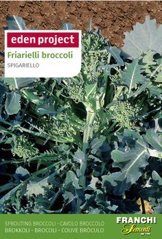 This 'broccoletti' is one of the most highly prized vegetables in Italy. It s a leafy green rather than the broccoli flowers and regrows after cutting. Neapolitans simply revere it, and use it with olives and chillies in their two most famous and popular dishes - pasta and pizza. It can also be eaten on its own as a vegetable, parboiled, tossed in seasoned olive oil with a squeeze of fresh lemon juice and a sprinkle of freshly ground black pepper. Annual: It is a summer brassica rather than…