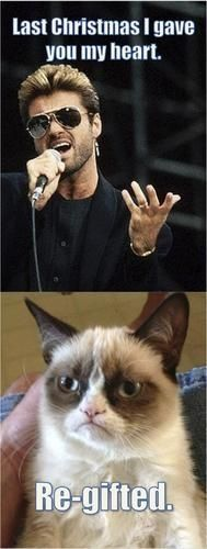 Grouchy Cat ...For more funny memes and hilarious stuff visit www.bestfunnyjokes4u.com/rofl-funny-pic-of-the-day-8/