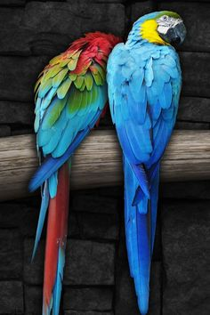 Pair of Colorful Parrots Bird on Branch Wallpapers Colorful Parrots, Colorful Birds, Exotic Birds, Love Birds, Beautiful Birds, Parrot Wallpaper, Cute Little Boys, Parrot Bird, Love Images