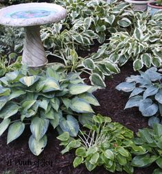 plant shade annuals – mostly impatiens–  as a border around this small hosta garden