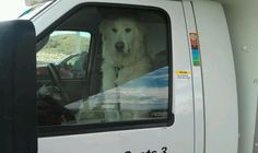Tank was caught driving a U-Haul! Anyone see him on the road?