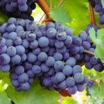 La Ruta del Vino de Jumilla. Visitar una bodega, pasear por un viñedo, degustar un buen vino y conocer el patrimonio cultural de la zona. Evadeo viajes os propone una escapada de enoturismo en Jumilla.
