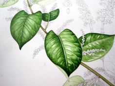 Lizzie Harper watercolour step 7 in painting a leaf