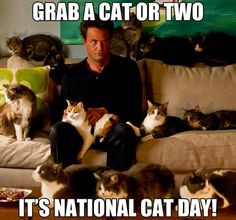 23cf5ca847dbadf3878d98df829548a4 october 29th is nationalcatday 19 lives design along with