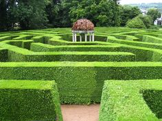 Maze at Symonds Yat by Cazzydance, via Flickr. Such vibrant green.