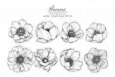 Anemone flowers drawing vector illustration and line art. - Buy this stock illustration and explore similar illustrations at Adobe Stock Flower Drawing Tutorials, Flower Line Drawings, Flower Sketches, Art Drawings, Drawing Flowers, Drawing Ideas, Art Floral, Floral Drawing, Anemone Flower