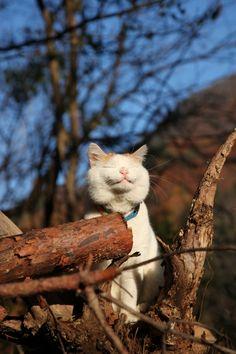 Shiro is always happy <3