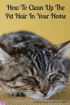 How to clean up the pet hair in your home without losing your mind! It can be so annoying but there are ways to try and keep it under control!