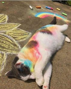 Love Cute Animals shares pics of playful animals, cute baby animals, dogs that stay cute, cute cats and kittens and funny animal images. Cute Little Animals, Cute Funny Animals, Funny Cats, Funny Animal Photos, Animal Pics, Funny Photos, Cat Aesthetic, Rainbow Aesthetic, Aesthetic Drawing
