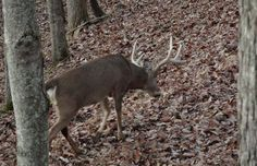 No natural funnels where the deer sign is hottest? Make your own and encourage deer to walk by your treestand.