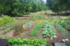 What Every New Homesteader Needs To Know Before Planting Their First Vegetable Garden - http://www.homesteadingfreedom.com/what-every-new-homesteader-needs-to-know-before-planting-their-first-vegetable-garden/