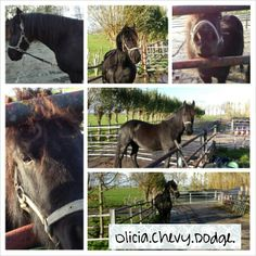 Mijn eigen paard(jes)