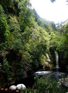Looking for a summery winter getaway? 25 Cape Town travel tips on what to do, see and eat in the Mothercity. This is a photo of the beautiful Newlands Forest . Stuff To Do, Things To Do, African Tree, Vacation Checklist, Table Mountain, Beautiful Forest, Cape Town, South Africa, Travel Tips