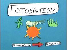 Cómo se desarrolla la fotosíntesis