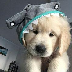 Calling All Animal Lovers: It's Pet Appreciation week!!!
