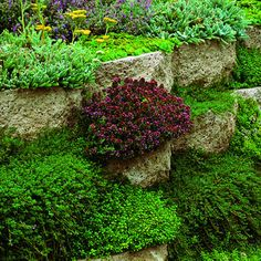 Planted retaining wall   # Pin++ for Pinterest #