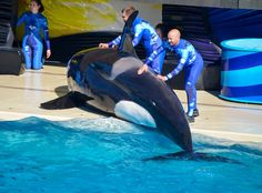 SeaWorld Orcas Have 'Alarming' Number Of Injuries, Vet Reveals