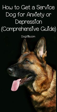 Dog Obedience Training: Want to know how to get a service dog for anxiety or depression? Keep reading fo… – Sam ma Dog Training Service Dog Training, Training Your Puppy, Dog Training Tips, Agility Training, Training Classes, Therapy Dog Training, Brain Training, Dog Agility, Training Online
