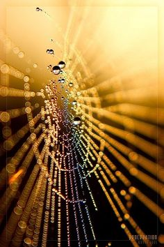 Dew upon a spiders web