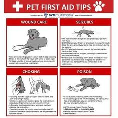 Pet First Aid Tips | Home Remedies, First Aid, Medical Tips and How To's - Survival Life Blog: survivallife.com #survivallife #emergencypreparedness #disasterpreparedness