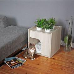 20 Weird Facts About Cats You Probably Didn't Know Cat Bed. Maybe she wouldn't want to sleep in our bed all the time if she had her own? Niche Chat, Wooden Cat House, Cat Room, Pet Furniture, Cat Facts, Weird Facts, Pet Home, Animal House, Pet Beds