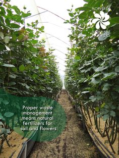 Florverde® cares about improvement in their #certified #farms! #flowers #sustainability