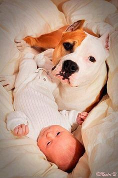 The Nanny Dog Will Love, & Protect