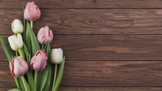 Close-up of white and pink tulips on wooden textured background Free Photo Light Wood Background, Pink And White Background, Textured Background, Yellow Tulips, Tulips Flowers, Colorful Flowers, Flower Background Wallpaper, Flower Backgrounds, Rose Frame