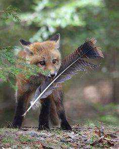 Red Fox Cub with Wild Turkey Tail Feather Animals And Pets, Baby Animals, Funny Animals, Cute Animals, Wild Animals, Strange Animals, Nature Animals, Beautiful Creatures, Animals Beautiful