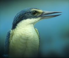 """""""Sacred Kingfisher Portrait"""" - artwork by Christopher Pope - now available as fine art reproductions - http://www.artreproductions.com.au/gallery.php?artid=2551"""