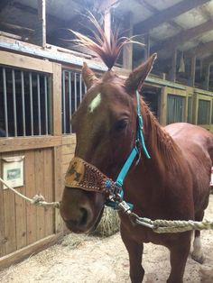 . Horse Puns, Funny Horses, All About Horses, Westerns, Cute Animals, Humor, Memes, Awesome, Pretty Animals