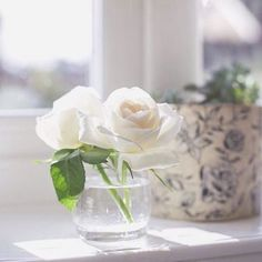 A bright and sparkly morning! White Cottage, Rose Cottage, White Roses, White Flowers, Cream Roses, White Lace, Beautiful Gardens, Beautiful Flowers, Nights In White Satin