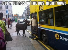 Only in Ireland!