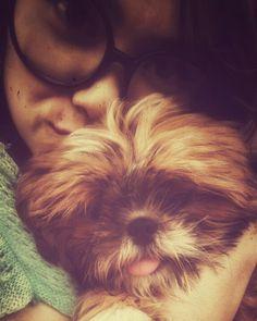 A Cute lil 1  #pet #dog #love