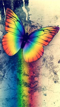 Opal color, color of life, rainbow background, butterfly background, butter Rainbow Wallpaper, Butterfly Wallpaper, Cute Wallpaper Backgrounds, Animal Wallpaper, Pretty Wallpapers, Colorful Wallpaper, Rainbow Butterfly, Butterfly Art, Rainbow Photography