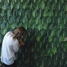 "Art director Jennifer James working on a wall of collard greens for the back cover of ""The Kinfolk Table."""