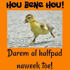 Darem al halfpad naweek toe! Afrikaanse Quotes, Videos Funny, Good Morning, Van, Tik Tok, Garden, Wednesday, Lisa, Language