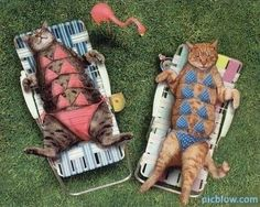 bathing suits for cats.. female felines of course !